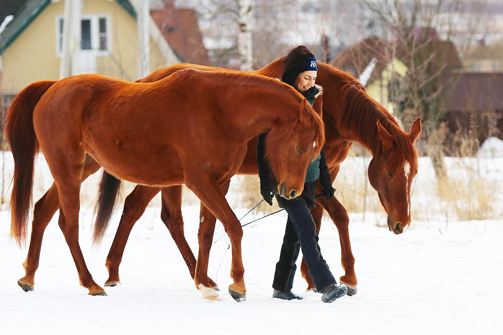 Синхронизация с двумя лошадьми