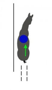 Внутренний зад идет в след внутреннего плеча. Цент тяжести (синий круг) посередине, в балансе.