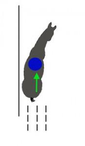 Внутренний зад идет в след внешнего переда, наступая под центр тяжести и принимая на себя вес.