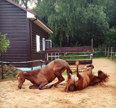 Устройство частной конюшни