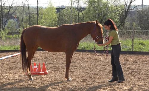 С чего начать тренинг лошади?