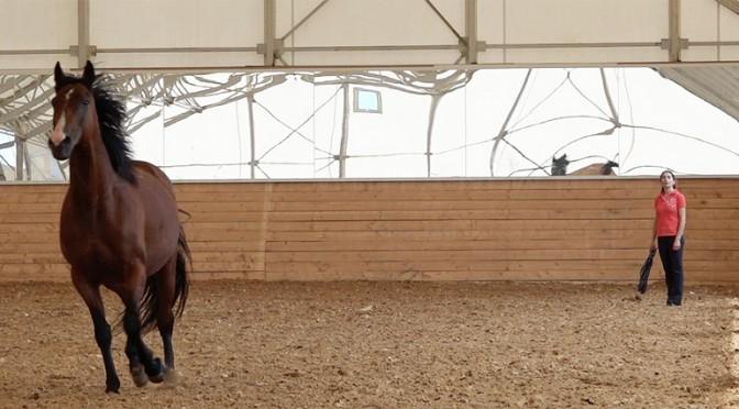 Настраиваем лошадь на диалог