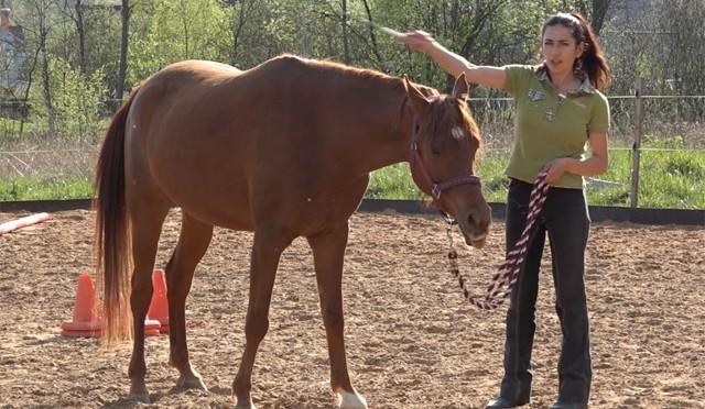 Приучать ли лошадь не бояться хлыста?