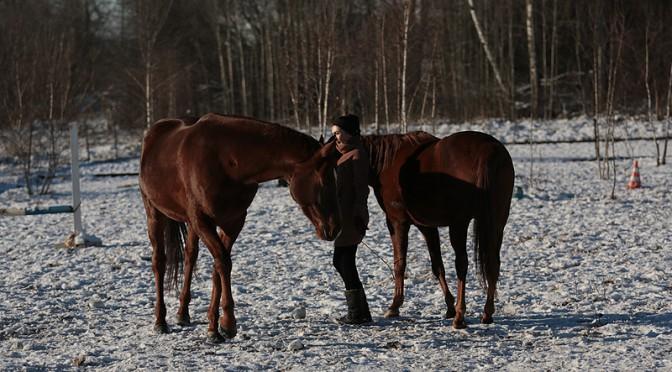 7 способов улучшить отношения со своей лошадью