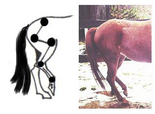 Что такое гимнастика для лошади?