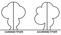 Асимметрия дерево