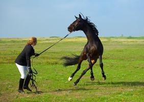 Лошадь срывается с корды