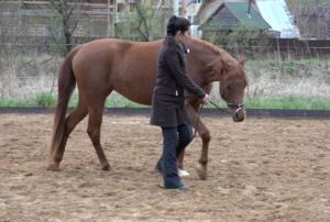 Положение рядом с лошадью позволяет быстро исправлять ее форму