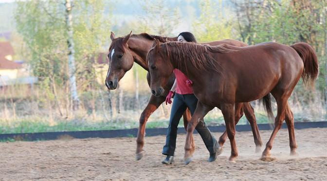 Танцы с двумя лошадьми