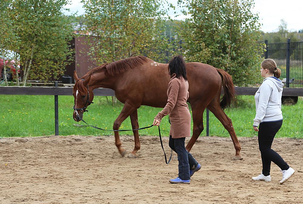 Вместе с Кэмбриджем показываем Вике, как переводить лошадь на гимнастическую работу на корде
